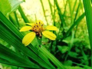 Hasil Foto Makro dengan Kamera Prosumer FujiFilm Finepix S4500
